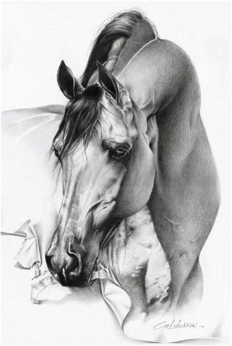 realistic pencil drawings of animals 22 pictures pastel