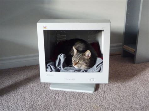 funny cat beds my baby girl and her bed i gave her 2 years ago funny cat