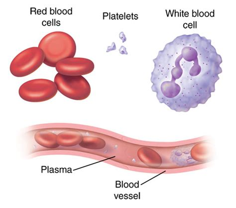 which blood component gives blood its color what are blood cells