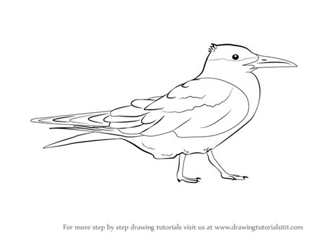 how to draw sea birds learn how to draw a tern seabirds step by step drawing