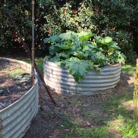 Raised Vegetable Garden Beds Corrugated Iron Water Tank Raised Beds And Vegetables On