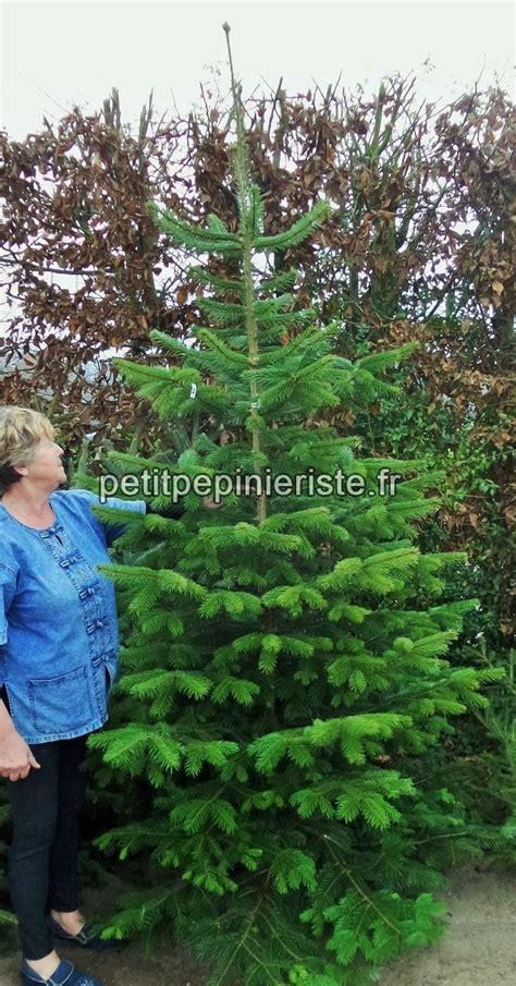 Planter Sapin Nordmann by Sapin Planter Prix