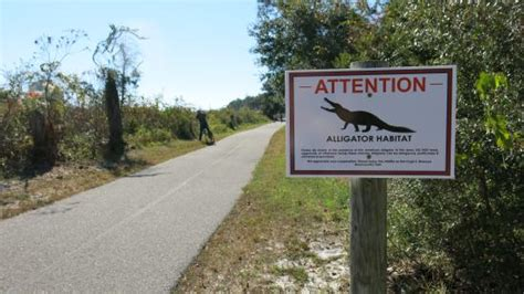 Gulf State Park Cabin Rentals by Searching For Alligators Picture Of Gulf State Park