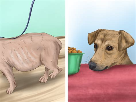 care after spaying how to care for a after spaying with pictures wikihow