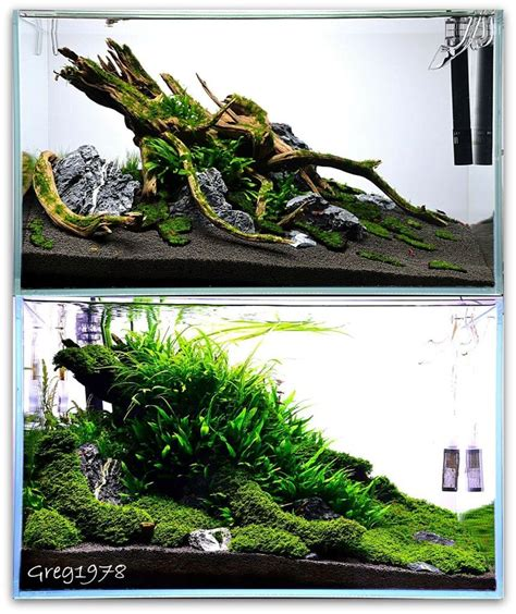 Aquascape Designs Products by 25 Best Ideas About Aquascaping On Aquarium