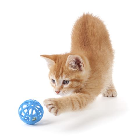 who plays cat play global pet foods