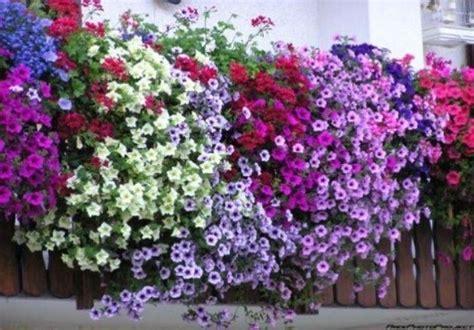 piante da terrazzo resistenti ricanti da balcone piante appartamento