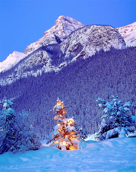 rocky mountain christmas tree winter lake louise in