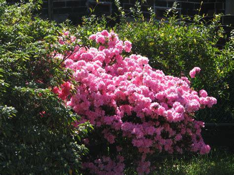 Flower Garden Sydney Walking Around Artarmon Sydney Trevor S Travels