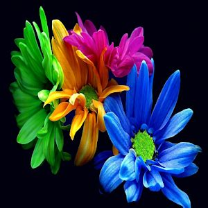 whatsapp wallpaper of flowers flowers images for whatsapp profile pic life style by