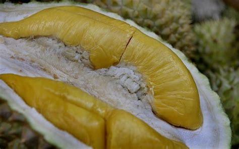 hail  king  fruit  types  durians  malaysia