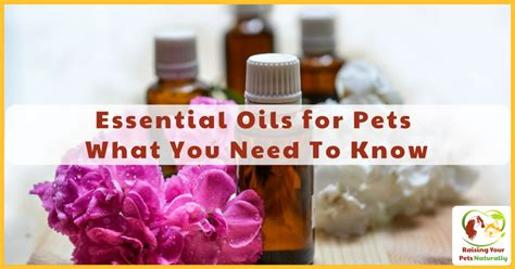 essential oils safe for dogs essential oils for dogs cats and pets an with isla fishburn ph d