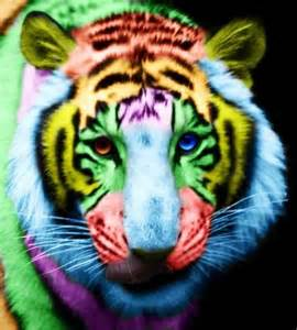 colorful tiger tiger rainbow colourful tiger rainbow