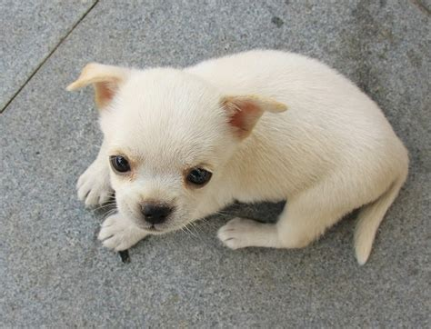 a baby puppy dogs and puppies like kittens and puppies puppy s breeds picture