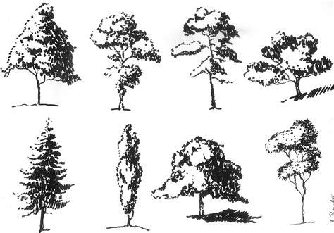 baum architektur zeichnung vegetation in der architektur kunst mobil