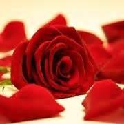 pagine bianche san in fiore rosa rosa colore bianco
