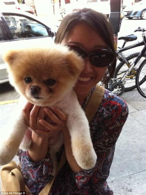 boo the pomeranian owner is boo the world s cutest an inside by