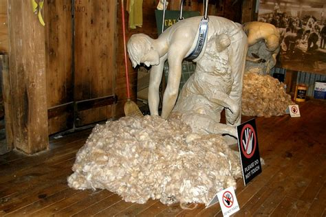 Pink Apologises To Aussie Wool Industry by Wool Museum Shearers