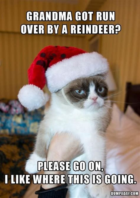 christmas cat memes january 2015 memes