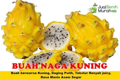 Bibit Buah Naga Unggul buah naga kuning unggul jualbenihmurah