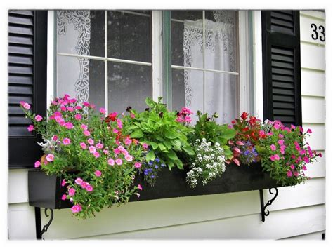 north window plants best flowers for window boxes gloria zastko realtors