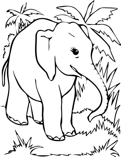 Free Elephant Hiding Coloring Free Coloring Page Elephant