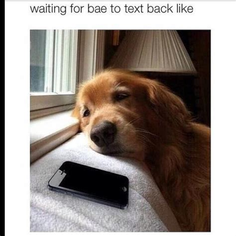 Waiting For Text Meme - waiting for bae to text back like