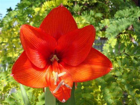 imagenes de flores exoticas del mundo flores del mundo bellos fondos de flores exoticas