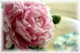 peony flowers tissue paper flowers in my garden journal a little