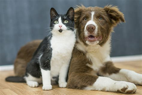 cat friendly dogs newstat study aims to identify cat friendly dogs