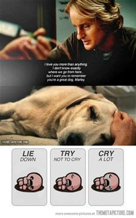 up film dog quotes 1000 images about sad movie scenes on pinterest scene