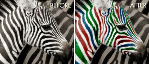 photoshop zebra pattern tutorial using photoshop to change the color of the stripes on a