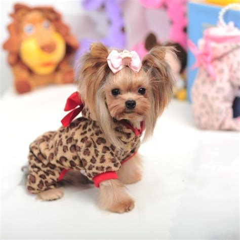clothes for yorkie puppies 1661 best friends for gucci slick my yorkie babies images on nature