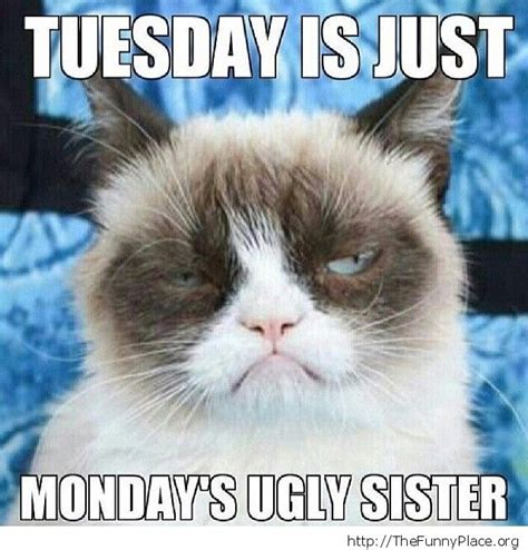 Grumpy Cat Monday Meme - my funny place page 8 thefunnyplace