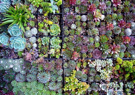 Succulent House by Succulent Plants Colouring Pages