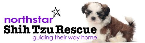 rescued shih tzu welcome www northstarshihtzurescue org