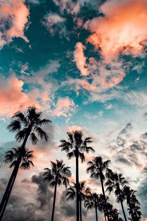 Live Palm Tree Wallpaper by 1001 Amazingly Backgrounds To Grace Your Screen