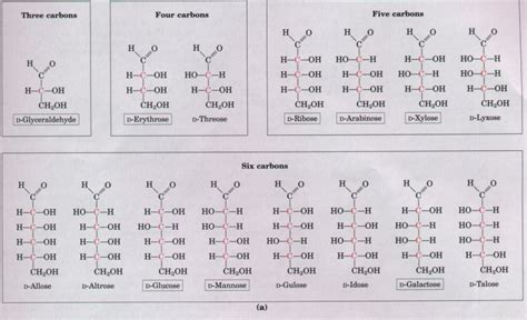 d aldoses carbohydrates chapter 11 carbohydrates