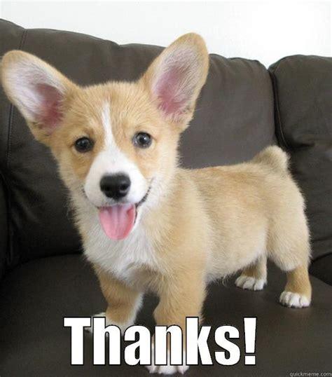 Corgi Lawyer Meme - thanks dog meme www pixshark com images galleries with