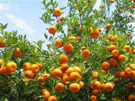 Orange Garden by In Praise Of The Jaffa Orange Journal Garden Design