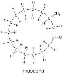 cadenas de atomos lineales el 225 tomo de carbono y los grupos funcionales