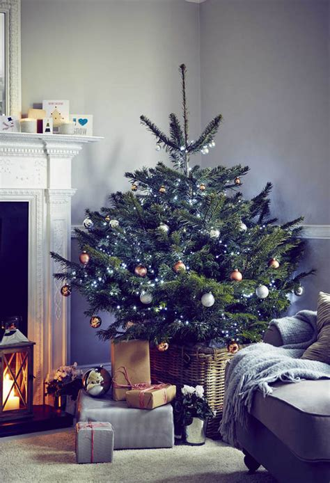 who introduced xmas trees to britain tree this year look for grown options garden style express co uk