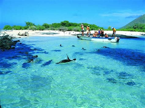 galapagos best islands 78 best images about the galapagos islands on
