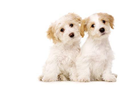 imagenes de perritos imagenes de perritos bebes tiernos wallpaper hd para