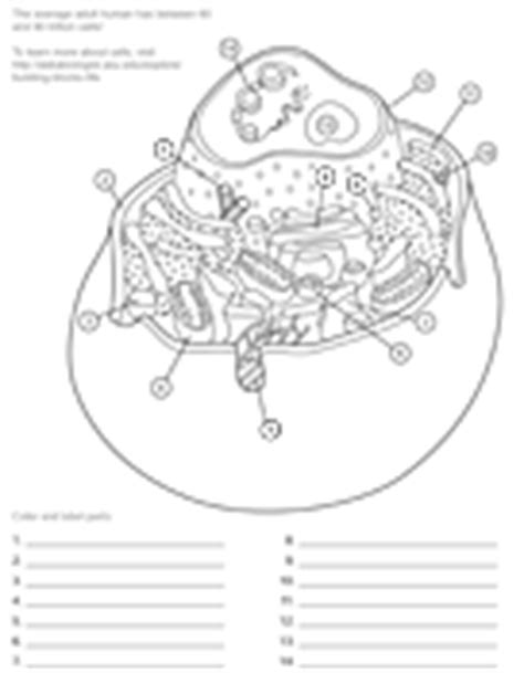 ask a biologist coloring page key cell membrane coloring cake ideas and designs
