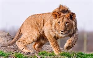 скачать красивые фото животных