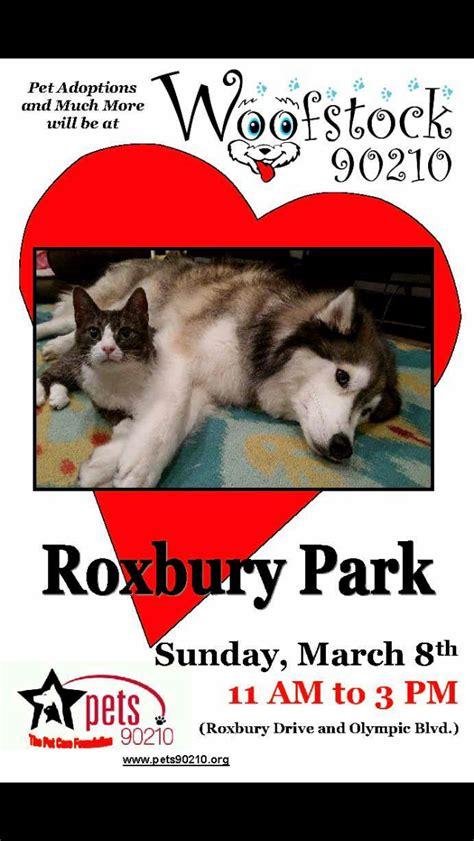 puppy pals rescue roxbury adoption pedro pet pals