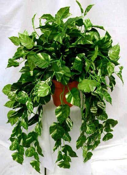 le piante d appartamento piante e fiori le piante d appartamento