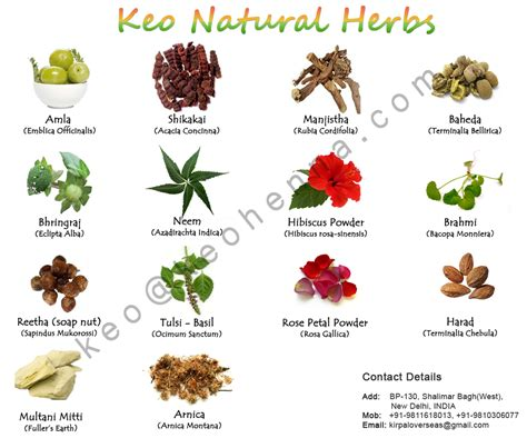 Where To Buy Herb Plants by Herbal Extracts Indian Medicinal Herbs Buy Herbal