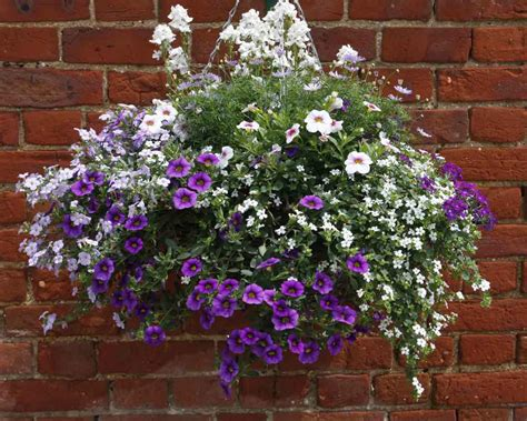 hanging basket grower green pastures norwich norfolk